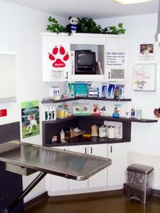 One of our exam rooms where you and your pet are made to feel comfortable & at home.