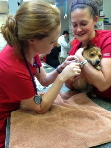 pet authority nail trim