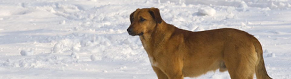 General Image - Dog in Snow