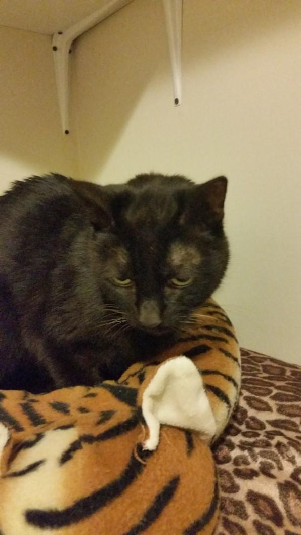 Cat illness, cat sick, vomiting, diarrhea, cat diseases ...