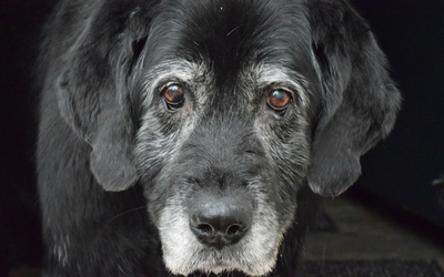 image for Celebrating Deaf Dog Awareness Week